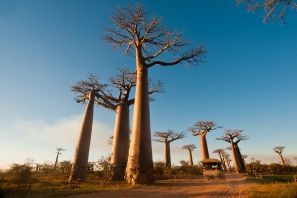 Madagaszkár, egy egyedülálló világ ***+