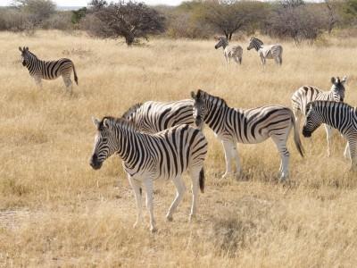 Namíbia körutazás II.