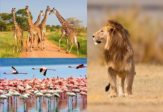 Szafari Tanzániában + Zanzibár üdülés - Magyar idegenvezetéssel