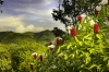 Costa Rica - Hív a természet!