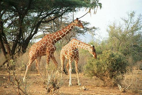 Kenya - Nyaralás szafarival