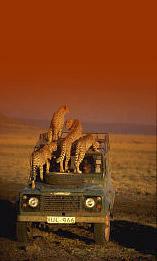 Kenya szafari