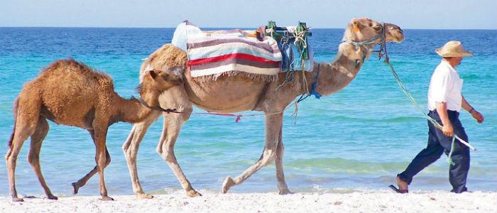 nő keresési menage tunézia)
