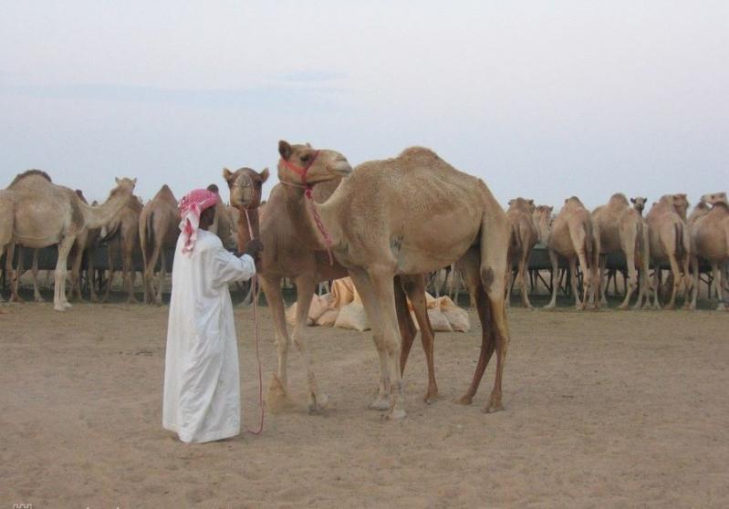 Arab találat kapcsolat