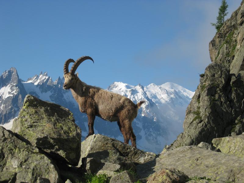 Svájci Alpok|14