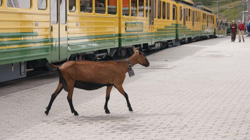 Svájci körutazás|3