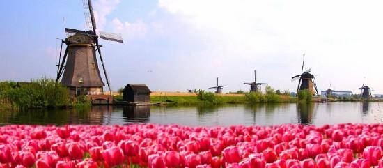 Holland Tulipán Show - visszaút repülővel