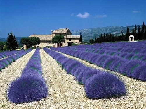Provence-i barangolások - csoportos városlátogatás
