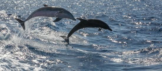 Kanári-szigetek: Lanzarote