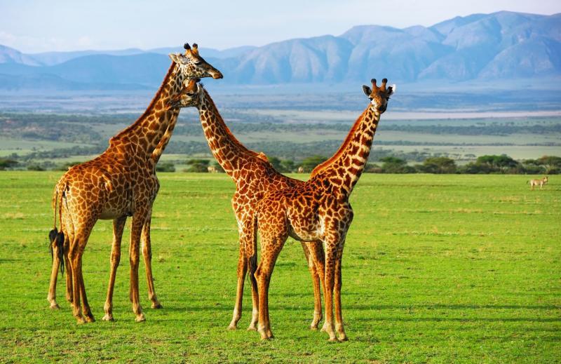 Serengeti szafari program pihenéssel Zanzibár szigetén