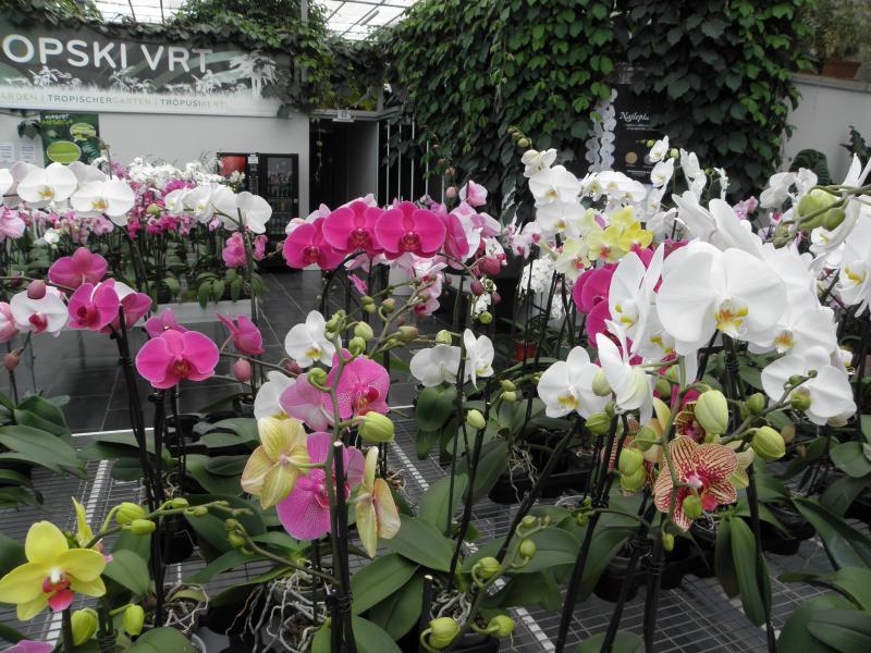 Orchideafarm|Csáktornya|2