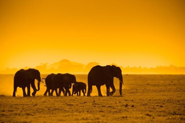 Tanzánia felfedezése (Egyéni) Egyéb