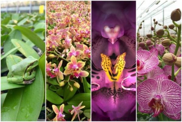 Orchideafarm és az Őrség elfeledett emlékei