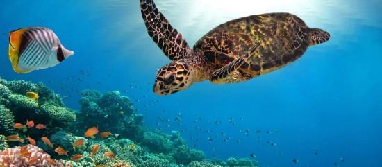 Seychelle-szigetek - a földi édenkert