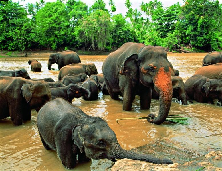 Nagy Srí Lanka körutazás Maldív-szigeteki pihenéssel