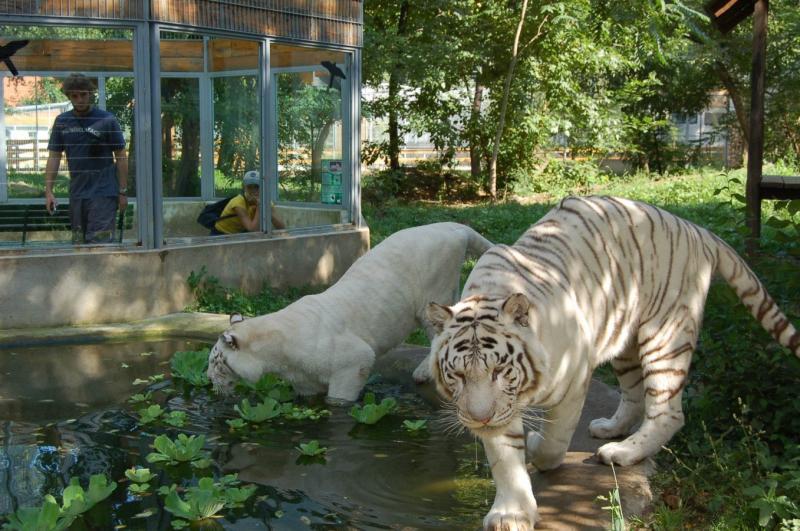 Állatkerti látogatás vagy fürdőzés Nyíregyháza - Sóstó