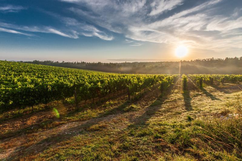 Toscana mező